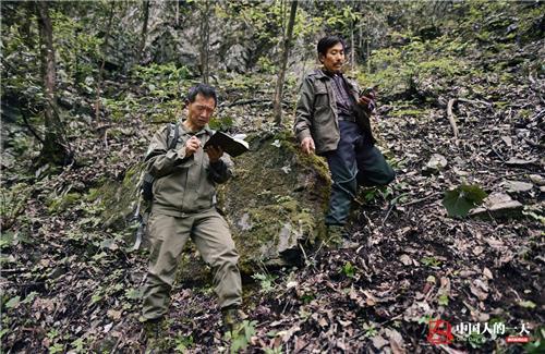 陈振法和朱一阶在用gps定位仪记录保护区野生动物脚印,记录动物行动的
