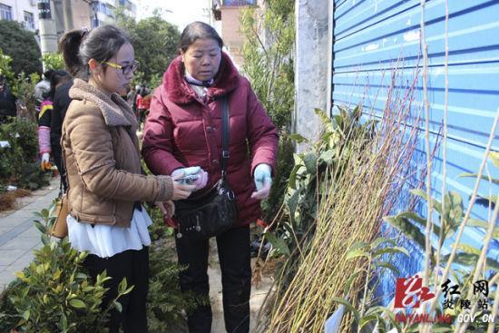 炎陵县苗木市场生意红火 上海苗木网2月21日消息:随着天气的好