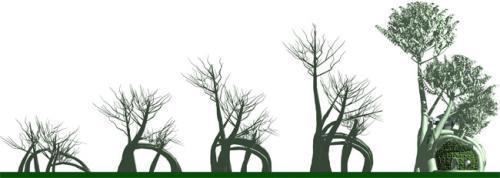 树木高压生根技术图解