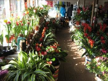 四川:节后花卉市场 价格一路上扬(图)