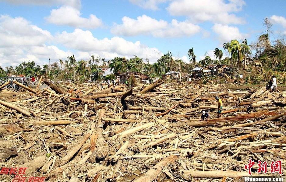 非法砍伐的树木与被洪水连根拔起的树木掺杂在一起