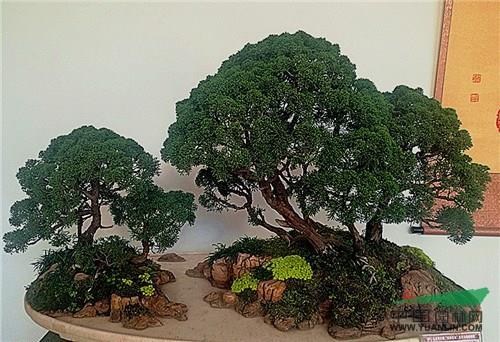 云南省盆景艺术大师将分别通过水旱盆景和树木盆景的现场示范制作表演