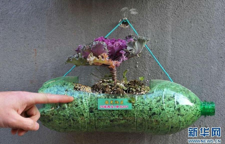 """湖南:长沙一小区蔬菜花卉""""栽""""上墙"""
