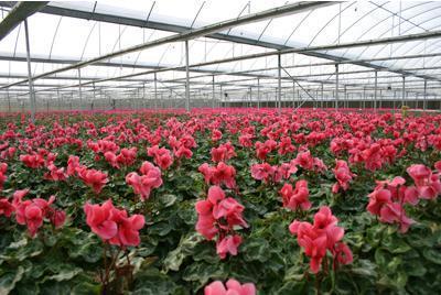 花卉行业市场遇冷 苗木电商可行性分析-美国红点红枫