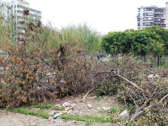 被连根拔起枯萎的树木