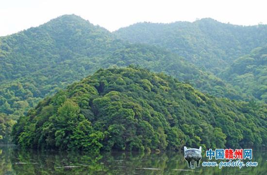 江西:崛起绿色前沿 赣州信丰县国有林场发展变迁